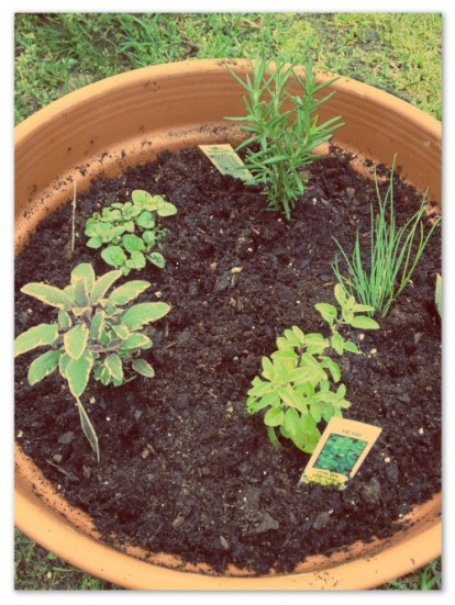 Herbs are in