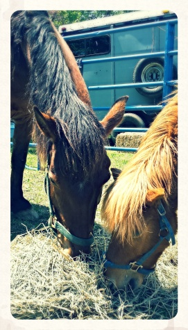 Hungry Horses!
